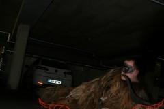 Heimlauf 2009 (13) (Homepage)
